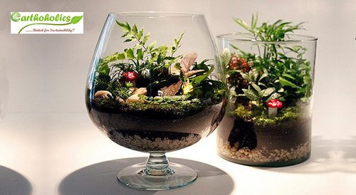 Image for Terrarium (Miniature Gardening) Workshop by Earthoholics 57f20ee739671b90078e291d